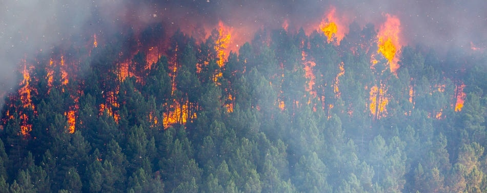 New Ground Sensor Network for Prevention and Extinction of Wildland Fires
